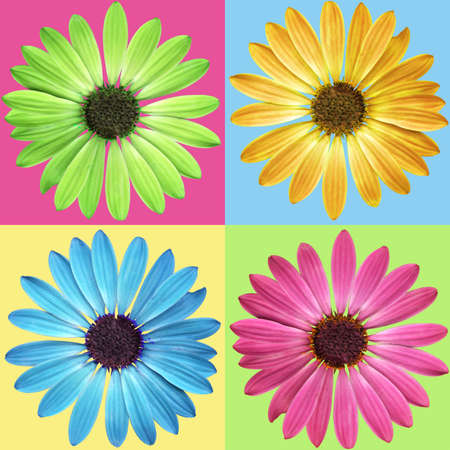Flowers of spring in bloom, isolated. Pattern.   photo