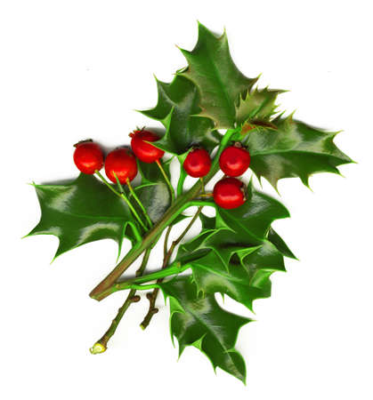 a sprig of holly isolated on a white background photo