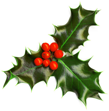 decoration: Christmas decoration - isolated holly with berries on the white