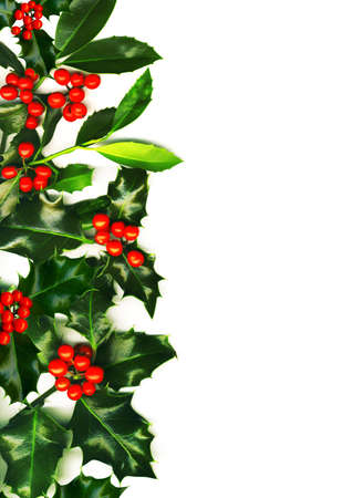 Christmas border made of holly with red berries, isolated on white