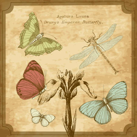 vintage postcard: Butterfly Background