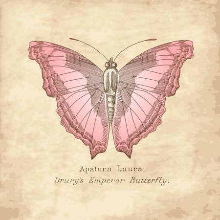 vintage postcard: Vintage Butterfly