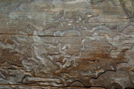 corroded: the wooden corroded, pine