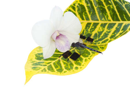 dragonfly on a leaf near an orchid