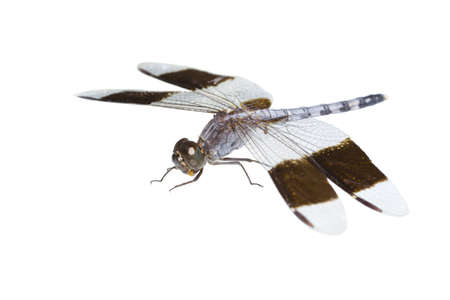 the dragonfly with parasites perishes