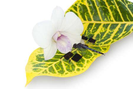 damsels: dragonfly on a leaf near an orchid