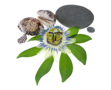 cockleshells: passionflower flower with stones and cockleshells Stock Photo