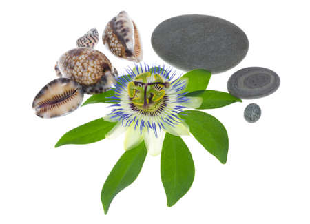cockleshells: passionflower flower with cockleshells and stones