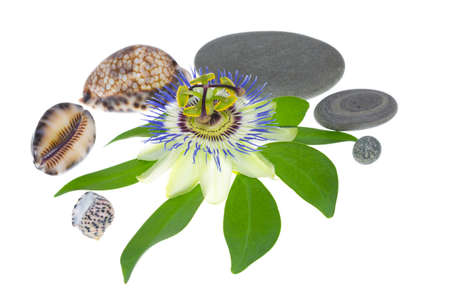 cockleshells: passionflower with stones and cockleshells Stock Photo