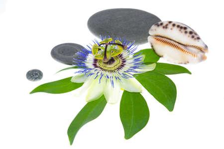 cockleshells: flower with stones and cockleshells