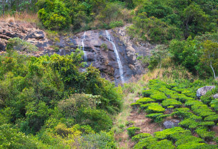 Landscape of the tea plantations with the waterfalls of India Kerala, India photo
