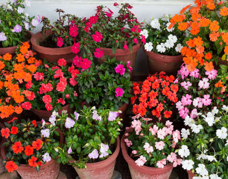 Various flowers Impatiens in containers photo