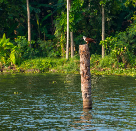 the bird sits on a log standing in water photo