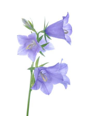 tak blauwe hand klok op een witte achtergrond, geïsoleerd