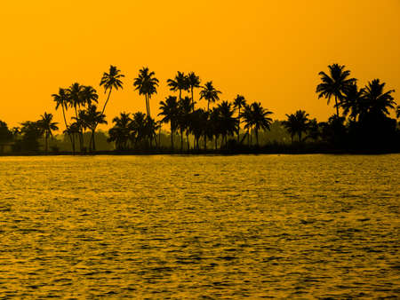 silhouette of palm trees in India photo