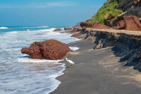 varkala: landscape of the coast with a white bird of Varkala  India, Kerala