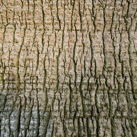 bark of palm tree: palm tree bark, background
