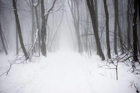 The Christmas mysterious winter snowy forest in a fog photo