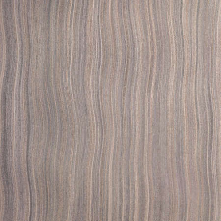ebony wood: ebony wood texture, tree background