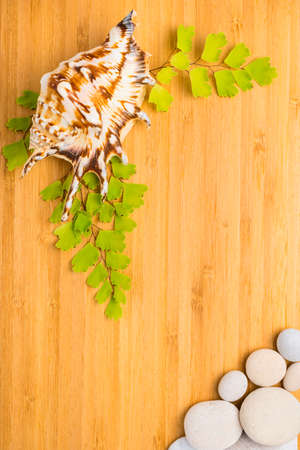 green branches, shell and pebbles on wooden  background photo