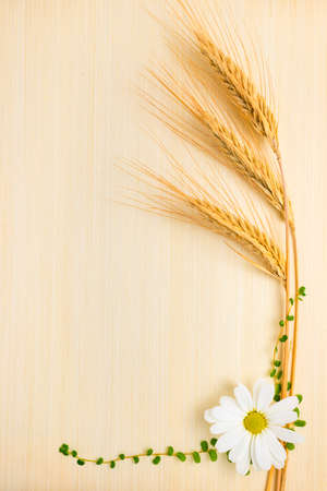 ear  wheat with chamomile and grass on wooden background  photo