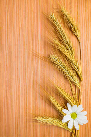 ear  wheat with chamomile on wooden background  photo
