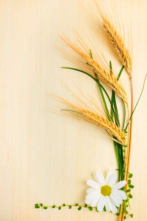three ears of wheat with chamomile and grass on wood texture photo