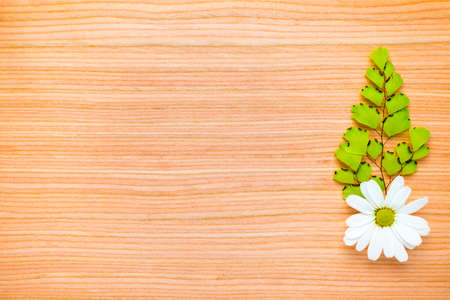 one green branch and chamomile on wooden  background photo