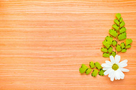 green branches and chamomile on wooden  background photo