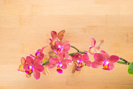spa concept, red orchid on the bamboo photo