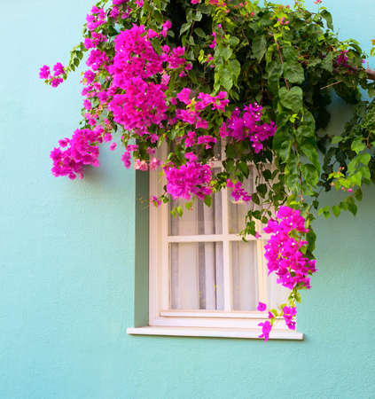 the window framed with fresh  flowers photo