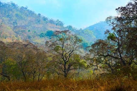 periyar: mountain landscape with trees in Periyar National Park, Kerala, India
