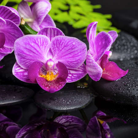 ferns and orchids: spa setting of stripped lilac orchid (phalaenopsis), branch of fern, black zen stones with drops and reflection on water