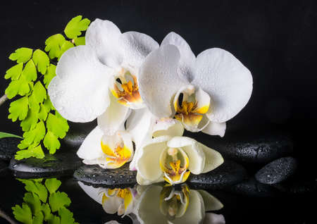 ferns and orchids: Beautiful spa setting of white orchid (phalaenopsis), green branch of fern, zen stones with drops and reflection on water