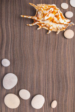 light pebbles and big shell on wooden ebony background photo