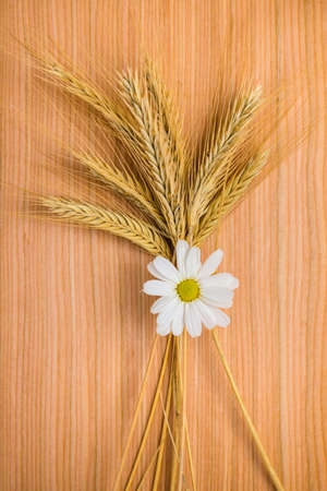 ripe golden ear wheat with chamomile on wooden background photo