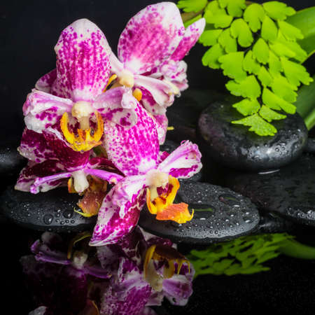 ferns and orchids: Beautiful spa concept of beautiful lace lilac orchid (phalaenopsis), green branch of maidenhair, zen stones with drops and reflection on water