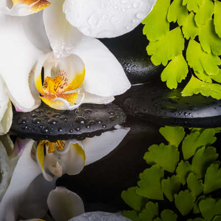 ferns and orchids: Spa concept of white orchid (phalaenopsis), green branch of maidenhair, zen stones with drops and reflection on water