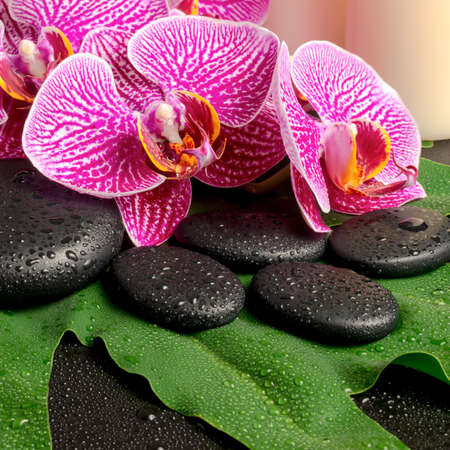 spa still life of blooming twig of stripped violet orchid (phalaenopsis ), zen stones with drop and candles on the big green leaf