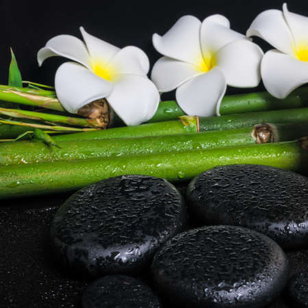 spa concept of zen basalt stones,  white flower frangipani and natural bamboo with drops, closeup  photo
