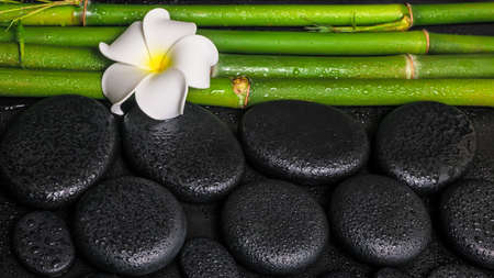 spa setting of zen basalt stones, white flower frangipani and natural bamboo with drops, closeup  photo