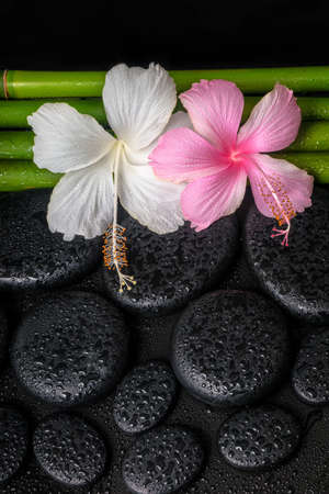 spa concept of zen basalt stones, white, pink hibiscus flower and natural bamboo with drops, closeup  photo