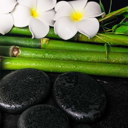 spa concept of zen basalt stones,  white flower frangipani and natural bamboo with dew, closeup  photo