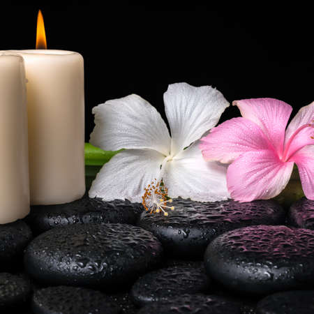 spa concept of white, pink hibiscus flowers, candles and natural bamboo on zen basalt stones with drops, closeup  photo