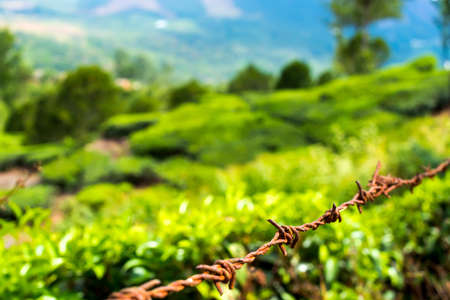 protection concept of steel barbed wire on rural green background, closeup photo
