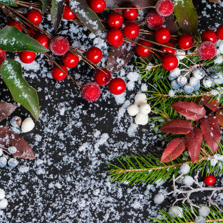 winter concept of evergreen branches, red leaves and berry with snow, closeup photo