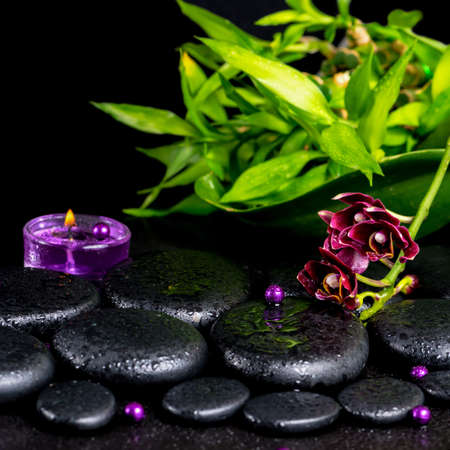 spa concept of flower orchid, phalaenopsis, zen basalt stones with drops, lilac candle, beads and bamboo, closeup photo