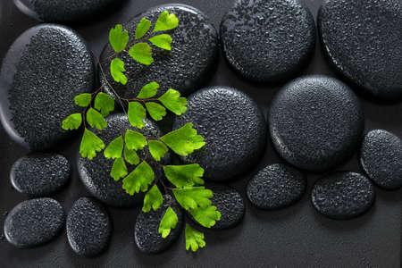 zen: beautiful spa concept of green twig Adiantum fern on zen basalt stones with dew, closeup