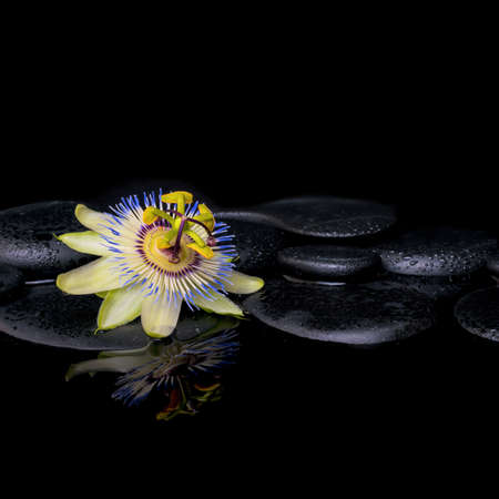 spa still life: spa still life of passiflora flower on zen stones with reflection in water, closeup Stock Photo