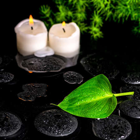 candle light: beautiful spa still life of green leaf Calla lily, twig and candles on zen basalt stones with dew in water, closeup